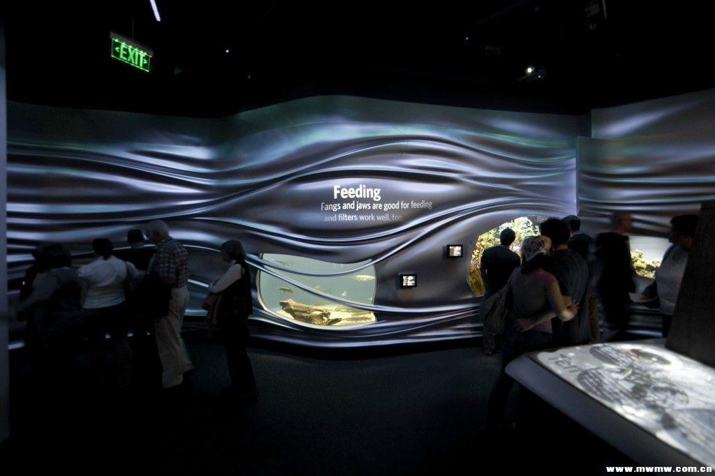 Steinhart水族馆3D荡漾的流体墙