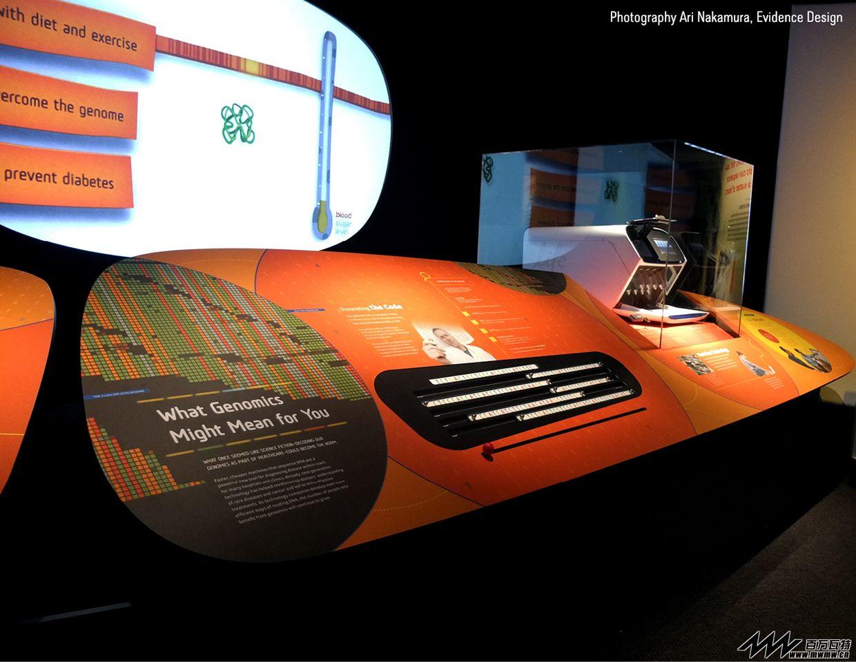 科学展览-人类基因组@美国史密森尼国家自然历史博物馆