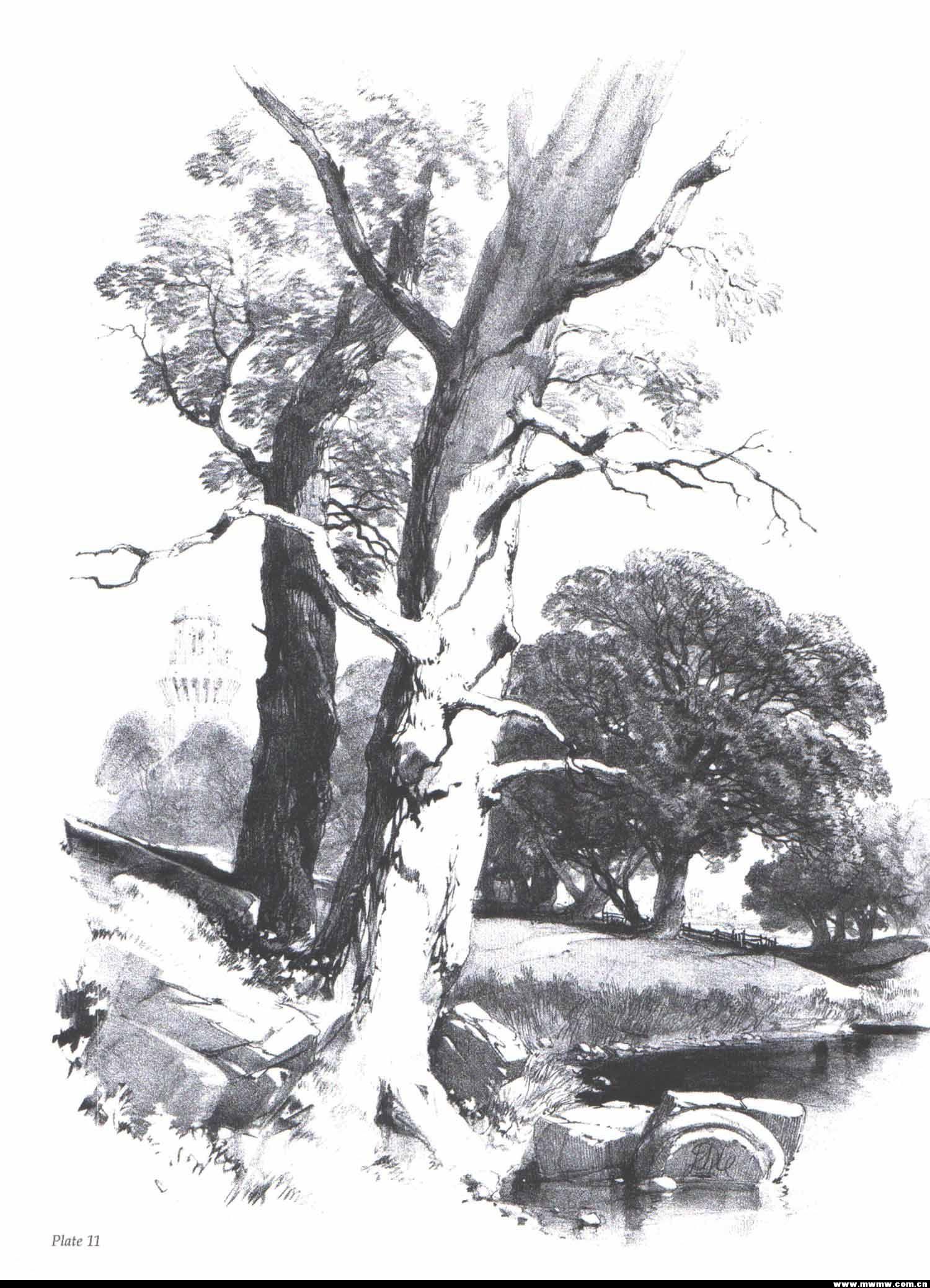 国外的一些手绘——树与自然风景